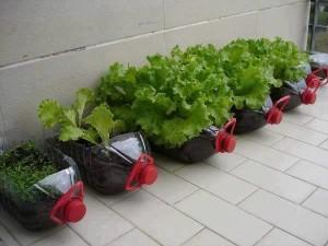 balkonda yeşillik yetiştirmek